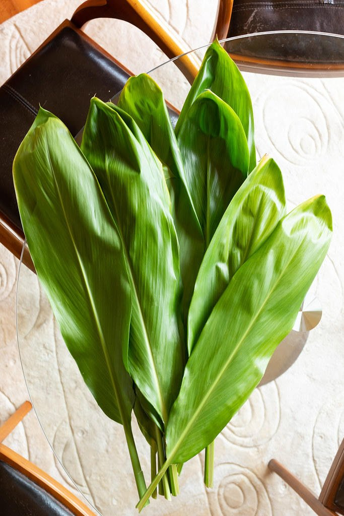 A bundle of fresh ti leaves