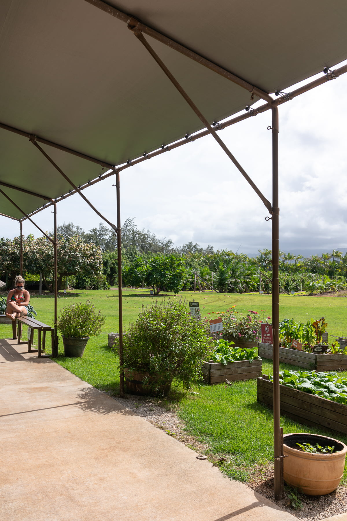 Looking out into the farming area of Kahuku Farms.