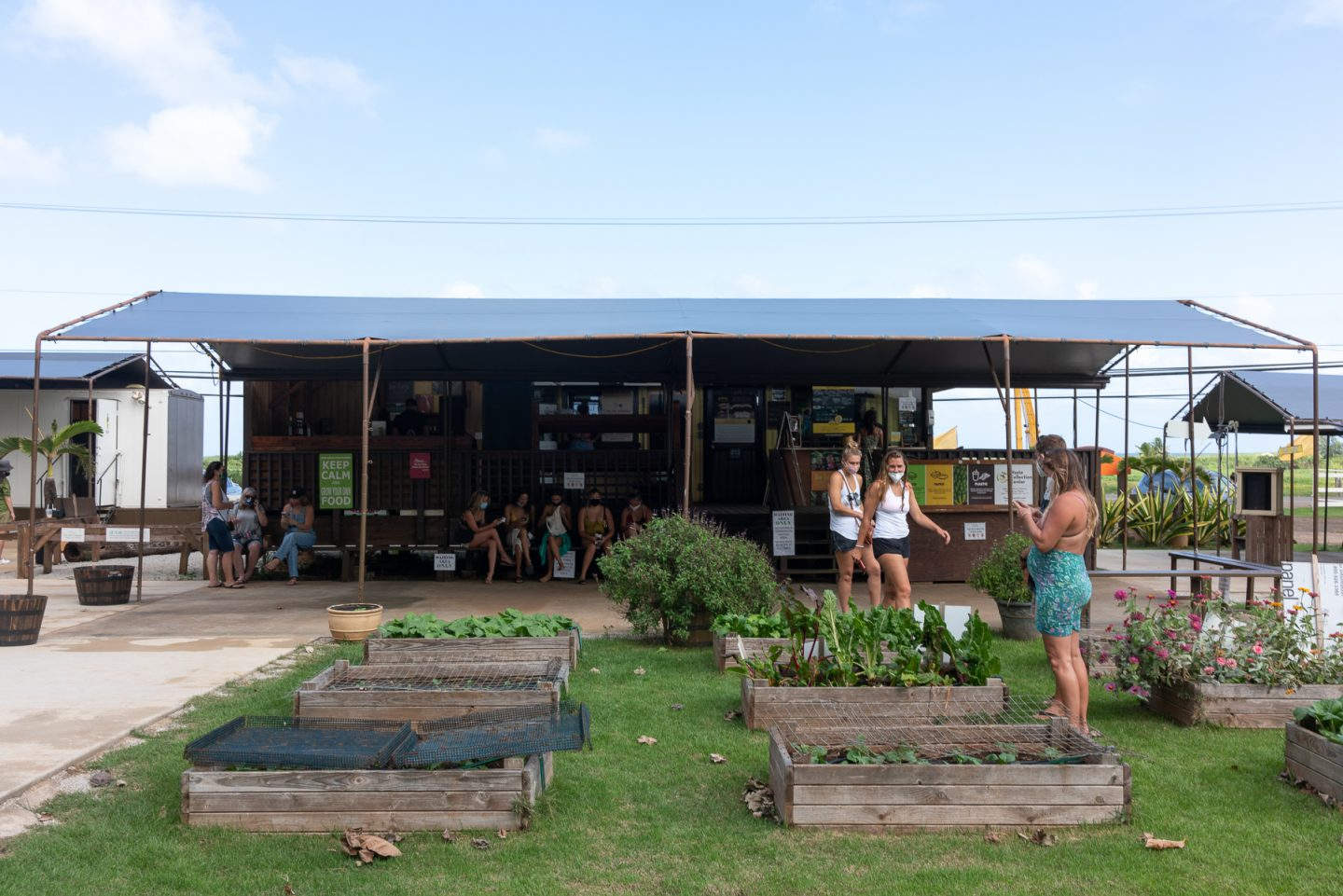 A partial view of the farm and the tented ordering area at Kahuku Farms.